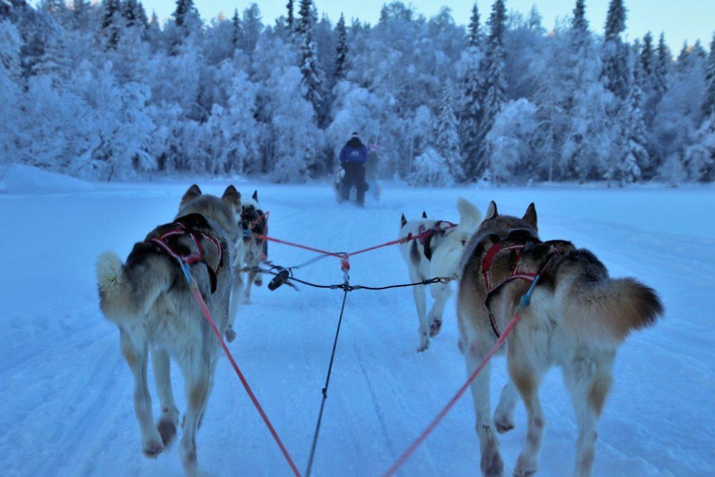 Husky Finland